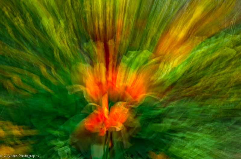 Impressions of Monet's Gardens